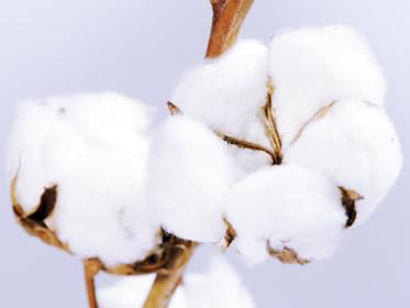 Trading sul cotone, opportunità per investire nel 2018