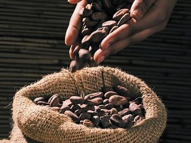Investire nel cacao: conviene nel 2018? Guida a prezzi e previsioni