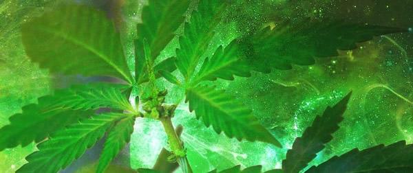Investi in azioni del settore Cannabis