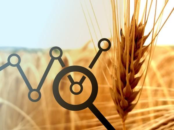 Previsioni prezzi grano: cosa bisogna sapere
