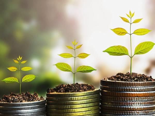 Investimenti redditizi in agricoltura: elenco delle migliori colture a più alto reddito